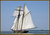 DAY 143 - MAY 30 - Rare opportunity today while out boating with some good friends.  We passed the Pride of Baltimore II.  Not much wind, so it was as though she was standing still posing for me.  The Pride of Baltimore II was commissioned in 1988 as a sailing memorial to her immediate predecessor, the original Pride of Baltimore, which was tragically sunk by a white squall off Puerto Rico in 1986, taking her captain and three crew members down with her.