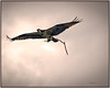 """DAY 170 - JUNE 26 - """"Lone ospreys, soaring in the clouds, fly with silent, peaceful poise, While turkeys, in their earth-bound crowds, fill the atmosphere with noise.""""  William Arthur Ward"""
